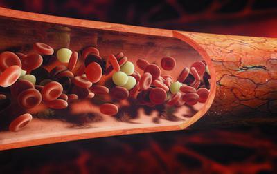 Blood Cells Flowing Through A Vein