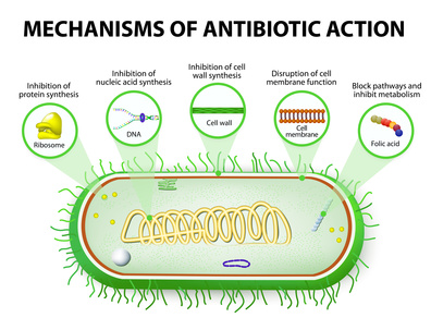 Mechanics of Action of an Antibiotics