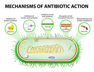 Mechanics of Action of an Antibiotics